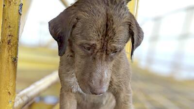 """""""Sus ojos estaban muy tristes"""": las fotografías del perro que llegó nadando a una plataforma petrolera a más de 100 millas de la costa"""