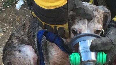 Rescatan a mascotas de un incendio en un suburbio de Chicago