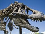No, no se estaban extinguiendo: sin el impacto del asteroide, los dinosaurios hubiesen continuado su dominio, según una investigación