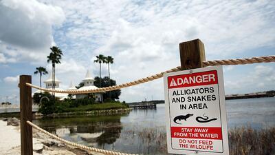 Construyen muro alrededor de lago de Orlando donde un caimán arrastró a niño