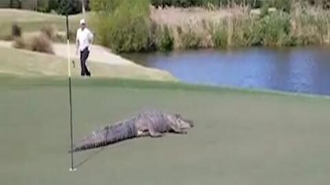 """Mira a ese monstruo"": graban a cocodrilo en campo de golf; aseguran que fue en Georgia"