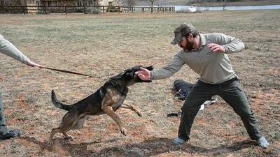 Perros policía para evitar tiroteos en colegios: la iniciativa de un exmarine para evitar la violencia armada