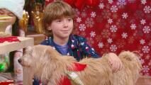 ¡Regalitos de cuatro patas! Por qué pedirle a Santa Claus una mascota en Navidad
