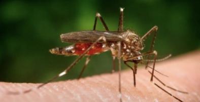 Primera muerte reportada este año por el virus del Nilo Occidental en Illinois