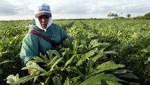 Cuando ganarse la vida se convierte en una pesadilla: hispanos denuncian el odio en el trabajo