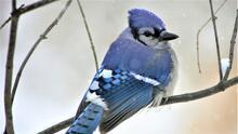 Anticipan repercusiones en especies de aves en otros estados tras la tormenta invernal en Texas