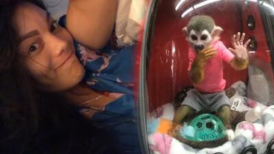 """""""El monito no es mío"""": Zuleyka Rivera responde a los que la criticaron por mostrar a una mascota encerrada"""