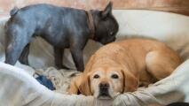 Si tienes un perro y aún no cuentas con un seguro exequial para este, debes conocer esta información