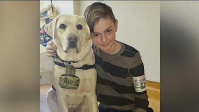 Las tiernas imágenes de Sully, el perro del fallecido presidente Bush, acompañando a niños con cáncer