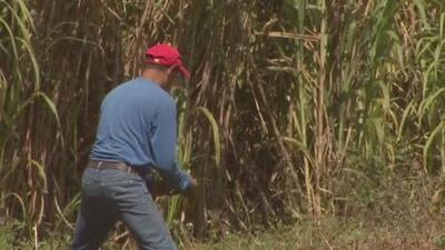 Agricultores de Puerto Rico participan de un foro en San Sebastián