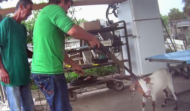 Este es el maltrato que sufren algunos animales en granjas de Florida, según organización