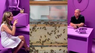 María Esther está preocupada porque parece haber un enjambre de abejas en su casa