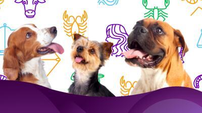 Tu perro ideal según tu signo zodiacal