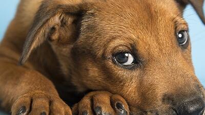 Extienden adopción para reducir eutanasia