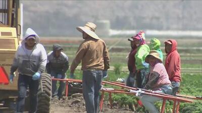 Campesinos de California abrazan la esperanza de una legalización por medio de la 'Tarjeta Azul'