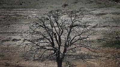 Qué significan los 27 millones de árboles que murieron en California entre 2016 y 2017