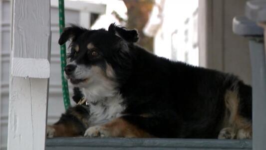 Conoce al perro que heredó 5 millones de dólares tras la muerte de su dueño