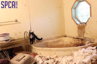 Autoridades rescatan decenas de animales por abuso en el norte de Texas