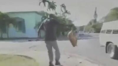 Denuncian ola de maltrato animal previa a la visita de los reyes de España a Cuba