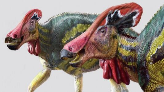 Con cresta y muy comunicativos: así era la nueva especie de dinosaurio descubierta en México