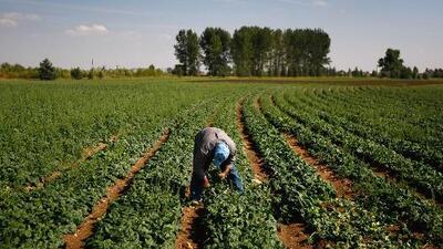 Congreso federal recibe una iniciativa de ley para trabajadores agrícolas que crearía la llamada tarjeta azul