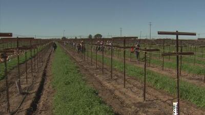 Convocan a trabajadores del campo de California a un foro informativo de inmigración ante los rumores de redadas