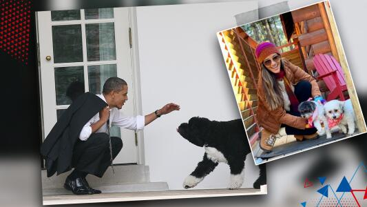 """""""La Cookie ya me preocupa"""": Muerte del perro de los Obama tiene a Omar nervioso por sus mascotas"""