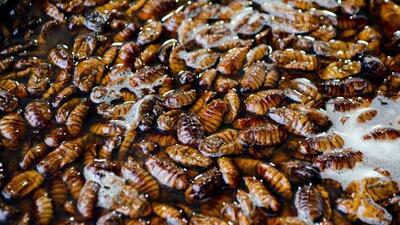 Aumentan las cucarachas en California por factores climáticos y venta de éstas por Internet