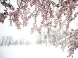 ¿La última nevada del invierno? Se espera frío, lluvia y nieve este martes en Filadelfia