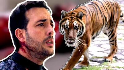 En fotos: 'El Colombiano' murió devorado por un tigre