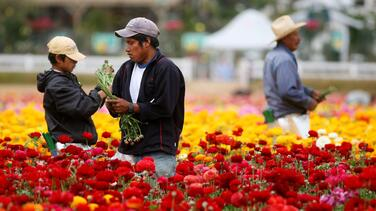 Sin inmigrantes, la población que puede trabajar en EEUU se estancará