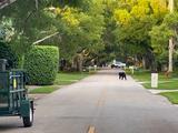 Buscan a un oso negro de 300 libras que pasea desde el fin de semana en el suroeste de Florida
