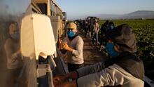 Estas organizaciones brindan apoyo a los trabajadores del campo ante la escasez de empleo
