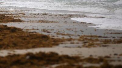 Marea baja o bajamar, el fenómeno que se vive en algunas zonas de la costa oeste de Florida
