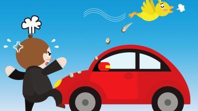 Cómo limpiar la caca de pájaro sin dañar la pintura de tu carro