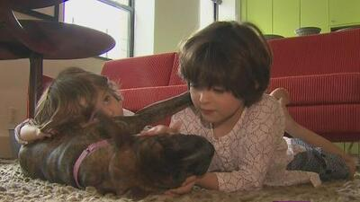 Los boquisabios: ¿qué hacer para que una mascota no divida a la familia?
