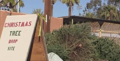 Lugares para reciclar su árbol de Navidad en Arizona