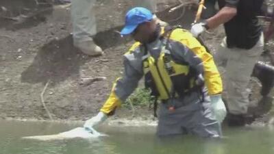 Familia identifica el cadáver de mujer que fue hallado flotando en un lago de Juana Díaz