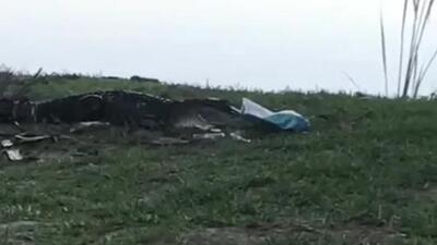 Visita inesperada arruina pícnic romántico: un caimán devoró todo, pero del guacamole no dejó ni el recipiente
