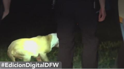 Multan a dueño de perros que mordieron a una mujer en Dallas