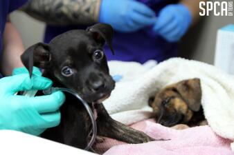 Rescatan a varios perros y gatos en el condado de Van Zandt