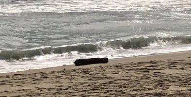 Rescatan a cinco bañistas arrastrados por corriente marina en Piñones