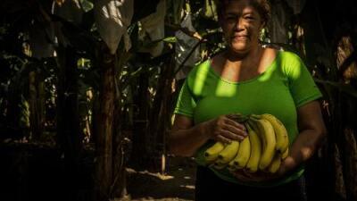 14 dólares por 12 horas de trabajo: detrás de cada banana de Honduras hay un campesino mal pagado