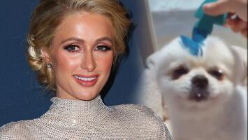 Paris Hilton intentó convertir a su perro Prince en el personaje 'Sonic': idéntico, no quedó