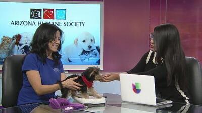 Adopción de mascotas sin costo el próximo 4 de agosto en Phoenix