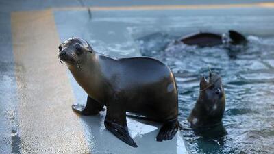 Buscan nombres para dos cachorros de leones marinos que acaban de nacer