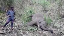 ¿Puede un rayo matar 18 elefantes de un golpe?: autoridades intentan de averiguar estas misteriosas muertes