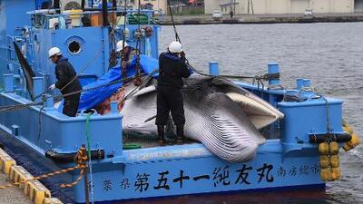 Después de 37 años, Japón permitirá la caza comercial de ballenas en sus aguas