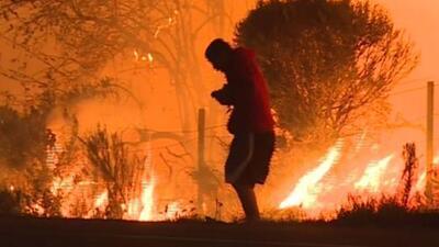 El falso héroe que dijo haber rescatado un conejo de uno de los incendios en California