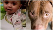 Sacrifican al perro que mató a una niña de un año en Illinois